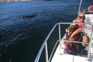 baleias