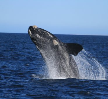 A ver baleias na Patagónia Argentina